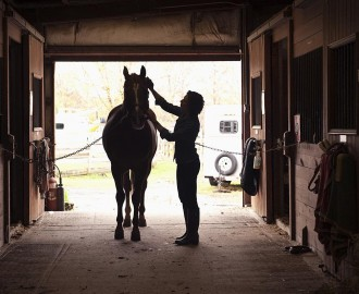 horse-grooming-resized
